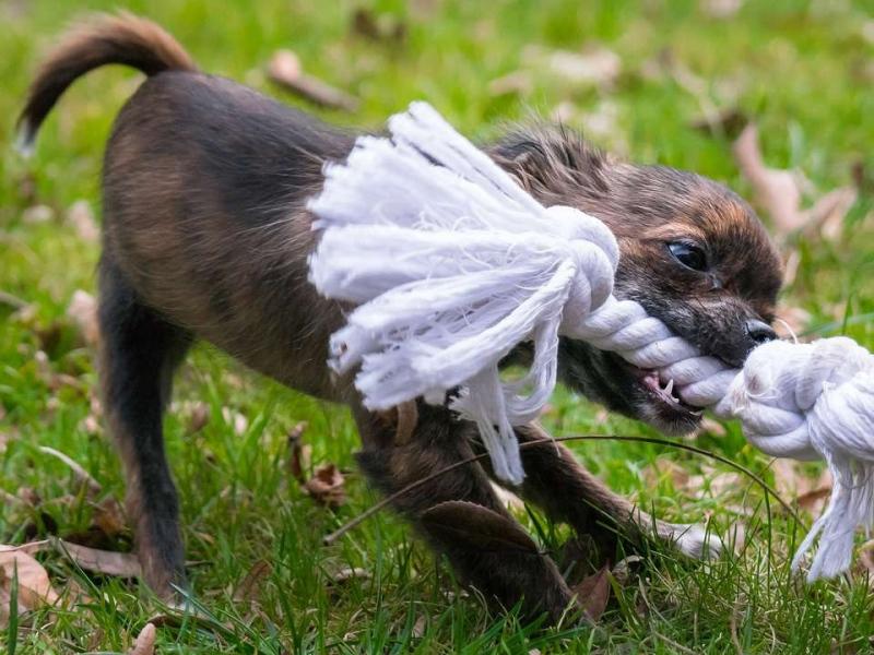 揭秘宠物狗打过疫苗了咬了人碍事不被狗咬后如何预防狂犬病